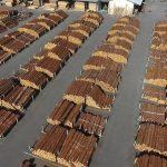 原木市場に同行して〜挽き40年以上の職人の目利きを撮影。